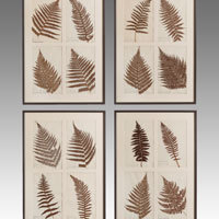 Antique pressed fern pictures